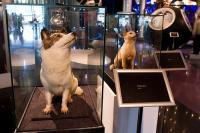 Weltraum Museum Moskau